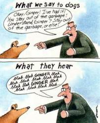 dogshear