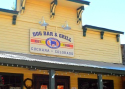 dog bars