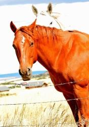 horses1s